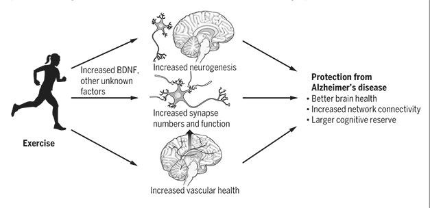 BDNF Benefits