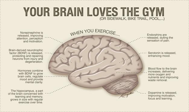 Brain Loves BDNF