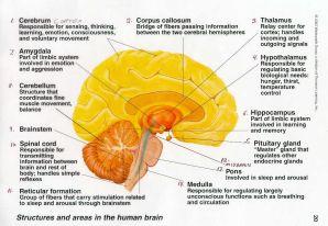 The brainn