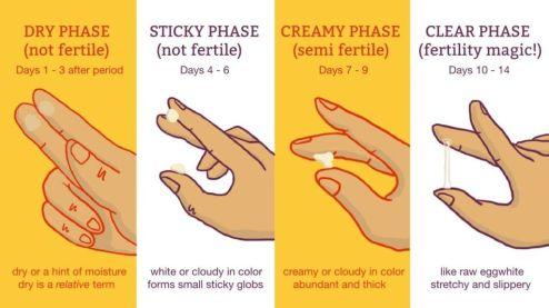 Cervical fluid