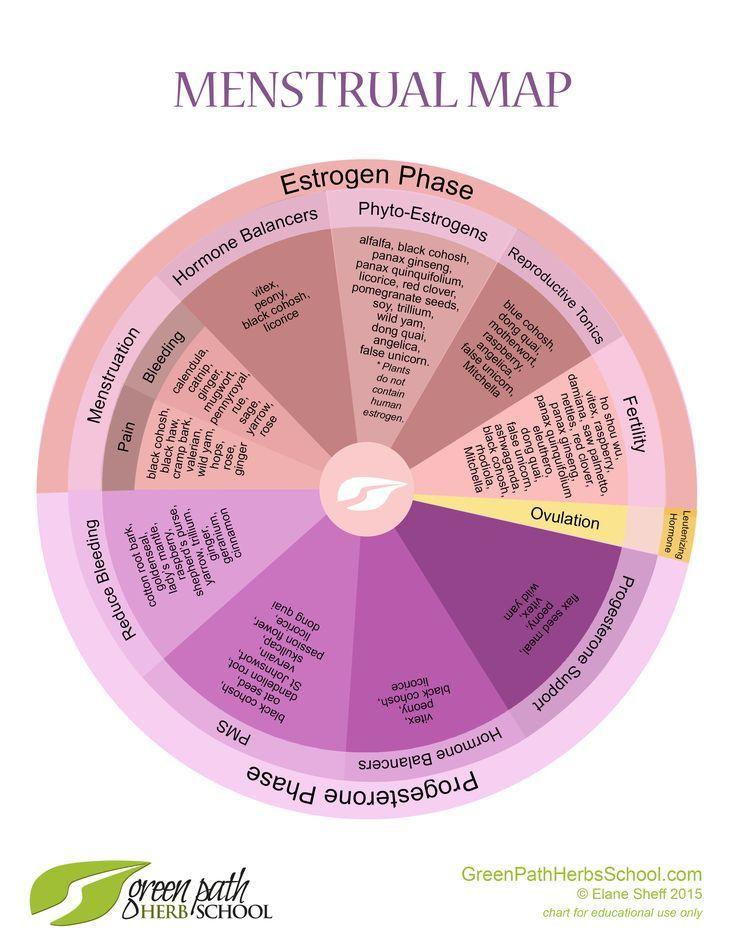 Herbal Information Menstrual Cycle